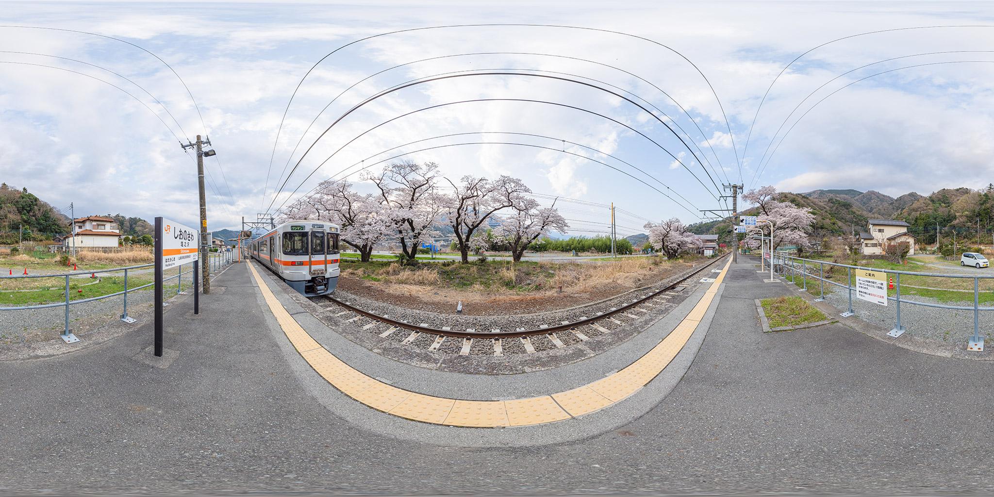 身延線塩之沢駅の桜並木